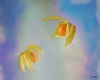 Zwei Physalis schweben vor fluoreszierendem Hintergrund.